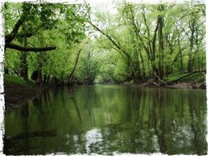 Picture of Sangamon River in Summer